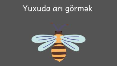 Photo of Yuxuda ari gormek ✅