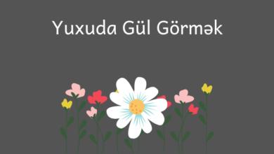 Photo of Yuxuda Gül Görmək 🌸