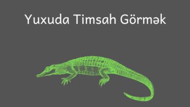 Photo of Yuxuda Timsah Görmək ✅