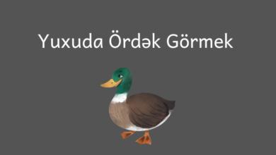 Photo of Yuxuda ordek gormek