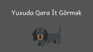 Photo of Yuxuda qara it gormek